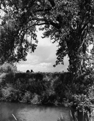<I>An irrigation canal, Larimer County, Colorado</i>  1995 Gelatin silver print  11 1/2 x 9 inches; 29 x 23 cm