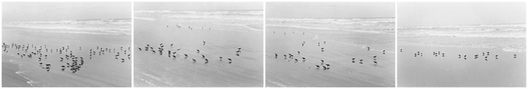 <i>On Any Given Day in Spring (II A-D)</i> 2008    Four gelatin-silver prints  Each image: 5 7/8 x 8 7/8 inches; 15 x 23 cm    Each sheet: 11 x 14 inches; 28 x 36 cm