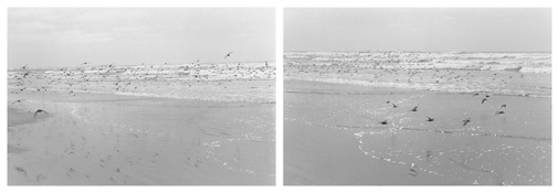 <i>On Any Given Day in Spring (IV A-B)</i> 2008    Two gelatin-silver prints  Each image: 5 7/8 x 8 7/8 inches; 15 x 23 cm    Each sheet: 11 x 14 inches; 28 x 36 cm