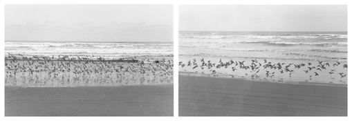 <i>On Any Given Day in Spring (V A-B)</i> 2008    Two gelatin-silver prints  Each image: 5 7/8 x 8 7/8 inches; 15 x 23 cm    Each sheet: 11 x 14 inches; 28 x 36 cm