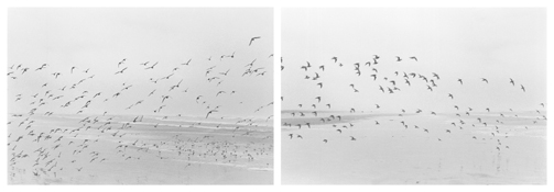 <i>On Any Given Day in Spring (VIII A-B)</i> 2007    Two gelatin-silver prints  Each image: 5 7/8 x 8 7/8 inches; 15 x 23 cm    Each sheet: 11 x 14 inches; 28 x 36 cm
