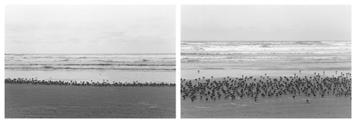 <i>On Any Given Day in Spring (X A-B)</i> 2008    Two gelatin-silver prints  Each image: 5 7/8 x 8 7/8 inches; 15 x 23 cm    Each sheet: 11 x 14 inches; 28 x 36 cm