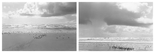<i>On Any Given Day in Spring (XV A-B)</i> 2007-2009    Two gelatin-silver prints  Each image: 5 7/8 x 8 7/8 inches; 15 x 23 cm    Each sheet: 11 x 14 inches; 28 x 36 cm