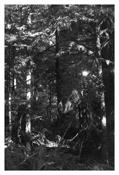 <i>Light Balances (I)</i> 2011    Gelatin-silver print  Image: 7 7/8 x 5 1/4 inches; 20 x 13 cm    Sheet: 14 x 11 inches; 36 x 28 cm
