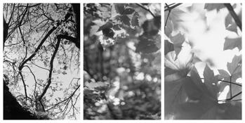 <i>Light Balances (II A-C)</i> 2008-2011    Three gelatin-silver prints  Each image: 7 7/8 x 5 1/4 inches; 20 x 13 cm    Each sheet: 14 x 11 inches; 36 x 28 cm