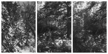 <i>Light Balances (III A-C)</i> 2002-2004    Three gelatin-silver prints  Image a: 11 3/4 x 7 7/8 inches; 30 x 20 cm    Image b: 11 3/4 x 7 7/8 inches; 30 x 20 cm    Image c: 12 x 7 3/4 inches; 31 x 20 cm Each sheet: 14 x 11 inches; 36 x 28 cm