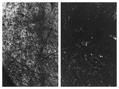 <i>Light Balances (IV A-B)</i> 2011    Two gelatin-silver prints  Each image: 7 7/8 x 5 1/4 inches; 20 x 13 cm    Each sheet: 14 x 11 inches; 36 x 28 cm
