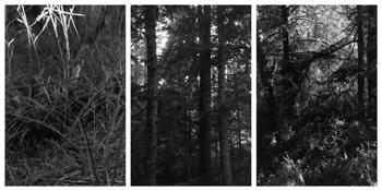 <i>Light Balances (V A-C)</i> 2011-2012    Three gelatin-silver prints  Each image: 7 7/8 x 5 1/4 inches; 20 x 13 cm    Each sheet: 14 x 11 inches; 36 x 28 cm