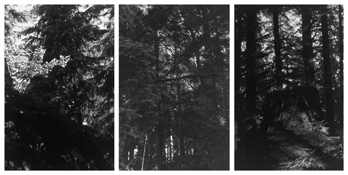 <i>Light Balances (VIII A-C)</i> 2008-2011    Three gelatin-silver prints  Each image: 7 7/8 x 5 1/4 inches; 20 x 13 cm    Each sheet: 14 x 11 inches; 36 x 28 cm