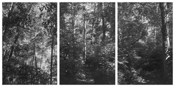 <i>Light Balances (IX A-C)</i> 2008    Three gelatin-silver prints  Each image: 7 3/4 x 5 1/4 inches; 20 x 13 cm    Each sheet: 14 x 11 inches; 36 x 28 cm