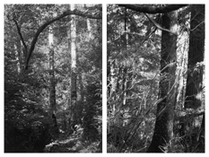 <i>Light Balances (X A-B)</i> 2008-2011    Two gelatin-silver prints  Each image: 7 7/8 x 5 1/4 inches; 20 x 13 cm    Each sheet: 14 x 11 inches; 36 x 28 cm