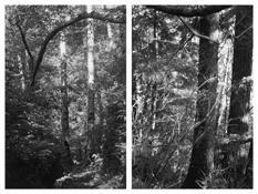 <i>Light Balances (X A-B)</i> 2008-2011    Two gelatin-silver prints  Each image: 7 7/8 x 5 1/4 inches; 20 x 13 cm    Each sheet: 14 x 11 inches; 36 x 28 cm