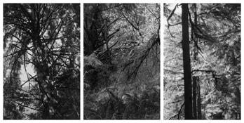 <i>Light Balances (XI A-C)</i> 2002-2011    Three gelatin-silver prints  Image a: 7 3/4 x 5 1/4 inches; 20 x 13 cm    Image b: 8 x 5 1/4 inches; 20 x 13 cm    Image c: 7 7/8 x 5 1/4 inches; 20 x 13 cm    Each sheet: 14 x 11 inches; 36 x 28 cm