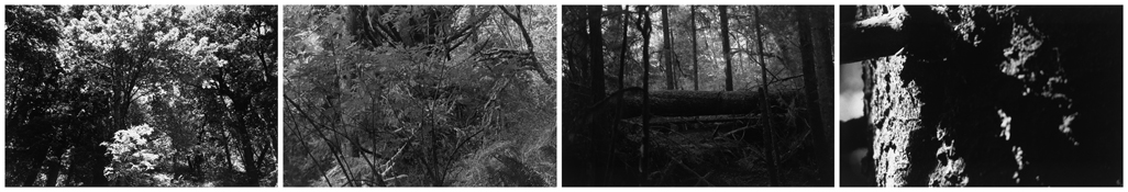 <i>Light Balances (XIII A-D)</i> 2011    Four gelatin-silver prints  Image a: 5 7/8 x 8 3/4 inches; 15 x 22 cm    Image b: 5 3/4 x 8 3/4 inches; 15 x 22 cm    Image c: 5 3/4 x 8 5/8 inches; 15 x 22 cm    Image d: 5 5/8 x 8 3/4 inches; 14 x 22 cm    Each sheet: 11 x 14 inches; 28 x 36 cm
