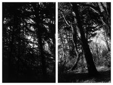<i>Light Balances (XV A-B)</i> 2011    Two gelatin-silver prints  Each image: 7 7/8 x 5 1/4 inches; 20 x 13 cm    Each sheet: 14 x 11 inches; 36 x 28 cm