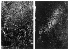 <i>Light Balances (XVI A-B)</i> 2005-2011    Two gelatin-silver prints  Each image: 7 7/8 x 5 1/4 inches; 20 x 13 cm    Each sheet: 14 x 11 inches; 36 x 28 cm