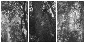 <i>Light Balances (XVII A-C)</i> 2002-2008    Three gelatin-silver prints  Each image: 7 7/8 x 5 1/4 inches; 20 x 13 cm    Each sheet: 14 x 11 inches; 36 x 28 cm