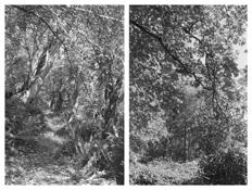 <i>Light Balances (XVIII A-B)</i> 2008    Two gelatin-silver prints  Each image: 7 7/8 x 5 1/4 inches; 20 x 13 cm    Each sheet: 14 x 11 inches; 36 x 28 cm