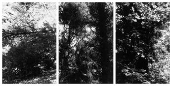 <i>Light Balances (XIX A-C)</i> 2011    Three gelatin-silver prints  Each image: 7 7/8 x 5 1/4 inches; 20 x 13 cm    Each sheet: 14 x 11 inches; 36 x 28 cm