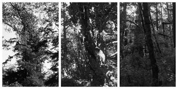 <i>Light Balances (XX A-C)</i> 2011    Three gelatin-silver prints  Each image: 7 7/8 x 5 1/4 inches; 20 x 13 cm    Each sheet: 14 x 11 inches; 36 x 28 cm