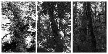 <i>Light Balances (XX A-C)</i> 2011    Three gelatin-silver prints  Each image: 7 7/8 x 5 1/4 inches; 20 x 13 cm    Each sheet: 14 x 11 inches; 36 x 28 cm