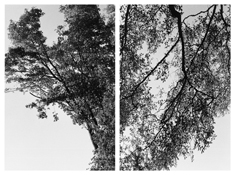 <i>Light Balances (XXII A-B)</i> 2011    Two gelatin-silver prints  Each image: 7 7/8 x 5 1/4 inches; 20 x 13 cm    Each sheet: 14 x 11 inches; 36 x 28 cm