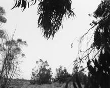 <I>Rancho Cucamonga, California</i> 1983 Gelatin silver print Image: 9 x 11 inches; 23 x 28 cm Sheet: 11 x 14 inches; 28 x 36 cm