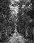 <I>Eucalyptus alley, Riverside, California</i> 1978 Vintage gelatin silver print Image: 11 1/4 x 9 inches; 29 x 23 cm Sheet: 14 x 11 inches; 36 x 28 cm