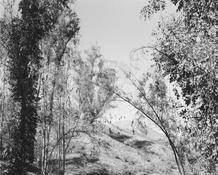 <I>Redlands, California</i> 1983 Gelatin silver print Image: 15 x 18 3/4 inches; 38 x 48 cm Sheet: 16 x 20 inches; 41 x 51 cm