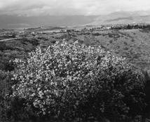 <I>Redlands, California</i> 1983 Gelatin silver print Image: 9 x 10 7/8 inches; 23 x 28 cm Sheet: 11 x 14 inches; 28 x 36 cm