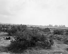 <I>Santa Ana Wash, San Bernadino County, California</i> c. 1980 Gelatin silver print Image: 9 x 11 1/8 inches; 23 x 28 cm Sheet: 11 x 14 inches; 28 x 36 cm