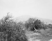 <I>Defoliated and bulldozed orchard. Highland, California</i> 1982-83 Gelatin silver print Image: 12 1/2 x 15 3/8 inches; 32 x 39 cm Sheet: 16 x 20 inches; 41 x 51 cm