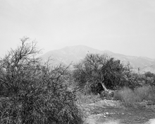 <I>Defoliated and bulldozed orchard. Highland, California</i>  1982-83 Gelatin silver print 12 1/2 x 15 3/8 inches; 32 x 39 cm