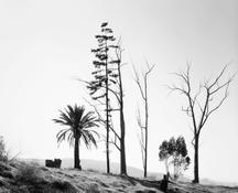 <I>Edge of San Timoteo Canyon, Redlands, California</i> 1978 Gelatin silver print Image: 9 x 11 1/8 inches; 23 x 28 cm Sheet: 11 x 14 inches; 28 x 36 cm