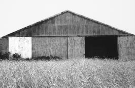 <I>Barn, Southampton</i> 1968 Gelatin silver print 8 1/2 x 13 inches; 22 x 33 cm