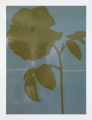 <I>Mourning</i> 2016 Enamel paint on aluminum 70 7/8 x 52 1/2 inches; 180 x 133 cm