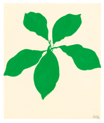 <I>Avocado</i> 1959 Oil on paper 16 5/8 x 13 7/8 inches; 42 x 35 cm