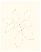 <I>Branch of Leaves</i>  1970 Graphite on paper  29 x 23 inches; 74 x 58 cm