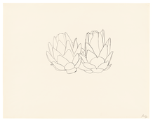 <I>Artichoke</i> 1961 Graphite on paper 22 5/8 x 28 1/2 inches; 58 x 72 cm