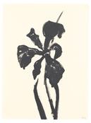 <I>Siberian Iris</i> 1989 Ink on paper 30 1/8 x 22 5/8 inches; 77 x 58 cm