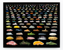 Isabella Kirkland  <I>Nudibranchia</i> 2015 Oil and alkyd on polyester over wood panel  48 x 60 inches; 122 x 152 cm