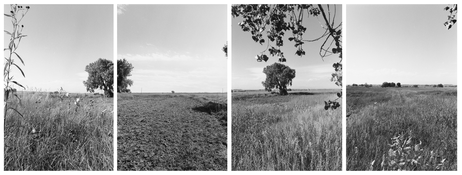 <I>South of Longmont, Colorado</i>  1986 Four gelatin silver prints  Each: 7 7/8 x 5 1/4 inches 20 x 13 cm