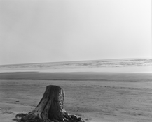 <I>Driftwood stump. Clatsop Beach, Clatsop County, Oregon</i>  c. 1991 Gelatin silver print  8 7/8 x 11 inches; 23 x 28 cm