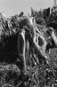 <I>Clearcut, Clatsop County, Oregon</i>  1999-2003 Gelatin silver print 7 3/4 x 5 1/4 inches; 20 x 13 cm
