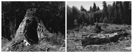 <I>Oregon</i>  1999-2002 Two gelatin silver prints  Each: 9 x 11 1/4 inches; 23 x 29 cm
