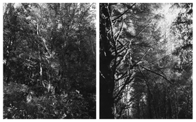 <I>Neahkahnie Mountain, Oregon II</i>  2014 Two gelatin silver prints  Each: 11 1/8 x 9 inches; 28 x 23 cm