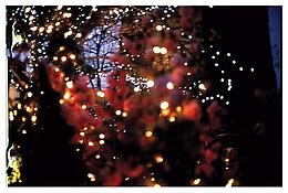 <i>Fairy lights in cherry blossoms, NY</i> 2004 Cibachrome 30 x 40 inches; 76 x 102 cm
