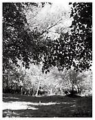 <i>Near Halfway, Baker County, Oregon</i> 1999-2003 Gelatin-silver print 14 x 11 inches; 36 x 28 cm