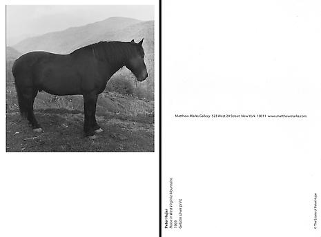 Horse in West Virginia Mountains 1969 Gelatin silver print