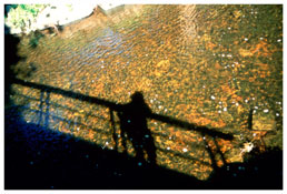 <i>Self-portrait on bridge at golden river, Silver Hill</i> 1998 Cibachrome 30 x 40 inches; 76 x 102 cm